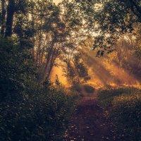 Утром в лесу :: Николай Алехин