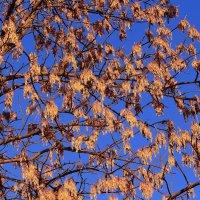 Узоры на фоне октябрьского неба :: Татьяна Ломтева