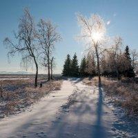 Зимняя дорога :: Павел Игнатов