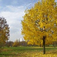 Осенний этюд4 :: Александр Атаулин