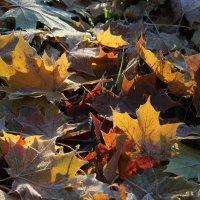 В саду горит костер... :: Наталья Лунева