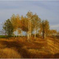 Осень :: Natali8163 *