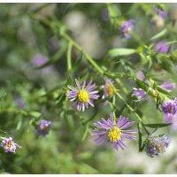 осенние цветы :: Viktoriya Bilan