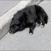 Наша собачья жизнь.... :: Вера