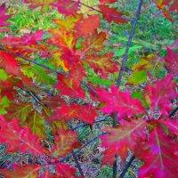 Осенних листьев кружева... :: Лара ***