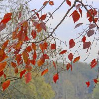 Прозрачная осень. :: Маргарита ( Марта ) Дрожжина