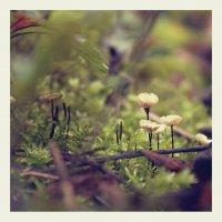 лесные жители :: Юрий Ващенко