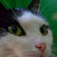 «Кошка Соня» :: Александр NIK-UZ