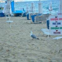 пляжный отдых2 :: oxana