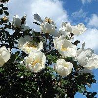 Весна :: Зоя Мишина