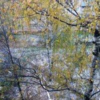 Первый снег :: Елена Федотова