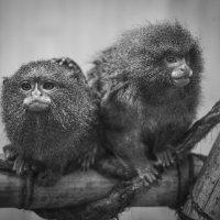 обезьяки :: elena leona