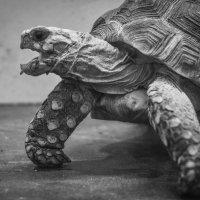 черепашка ниндзя :: elena leona