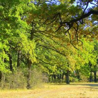 Осень в дубовой роще. :: Валентина ツ ღ✿ღ