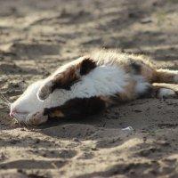 Я лежу на пляжу , не на кого не гляжу :: Сергей Маршалков