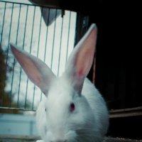 Кролик Доча :: Марина Дубровина