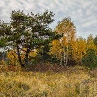 Цвет осени 4 :: Андрей Дворников