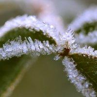 Зима подкрадывается :: Татьяна
