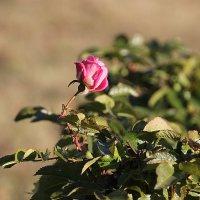 Цветок надежды и любви.... :: Tatiana Markova