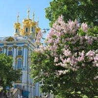 Сирень и храм :: Наталья