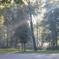 Утро в парке Нордекю :: novik Юрий Новиков