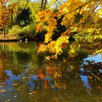 Над водой осень склонилась :: Alexander Andronik