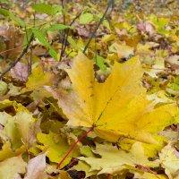 Осенний лист :: Юрий Стародубцев