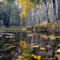 Дышит осень в берёзовой роще, золотою листвой шелестя..... :: Алексей