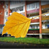 Осень... Дождь... :: Natalisa Sokolets