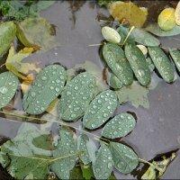 В слезах осеннего дождя... :: Нина Корешкова