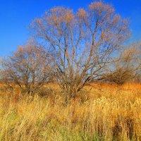 Золотая осень. :: Татьяна ❧