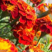 Краски лета :: Анастасия Смолина