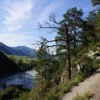 Козья тропа вдоль Катуни :: Наталия Григорьева