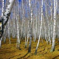 Осень золотая :: юрий Амосов