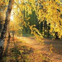 Осени янтарное тепло... :: Лесо-Вед (Баранов)