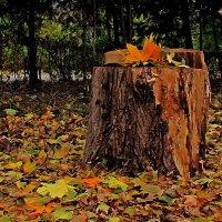и даже пень в осенний день листвой украситься желает... :: Александр Корчемный