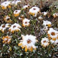 Цветы в снежном хороводе . :: Мила Бовкун