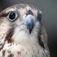 птичка :: Константин Симонов