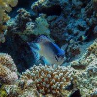 Дайв-сайт Blue-Hole в Дахабе (Египет) :: Elka34 34