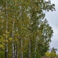 Осенней тропой :: Алексей Масалов