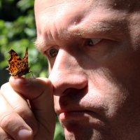 Бабочка :: Александр Алексеев