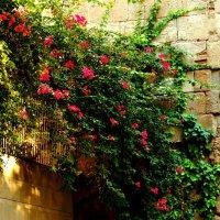 Цветы на стене) :: Юлiя :))
