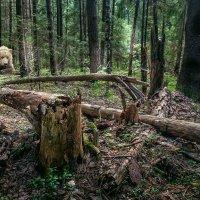 В лесной глуши :: Александр Лебедев