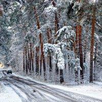 Первый снег :: Анатолий Фирстов