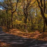 Осенний лес в Пятигорске на горе Бештау :: Ирина Помогайбо