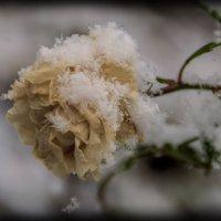 ...память... :: Андрей Гр