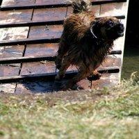 Собак :: Антон Сергиенко