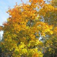 Яркие краски осени :: Дмитрий Никитин