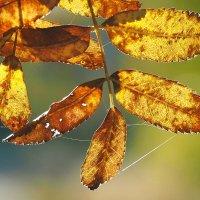 Элегантность осеннего света :: Swetlana V