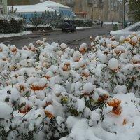 Установление временного снежного покрова :: Галина